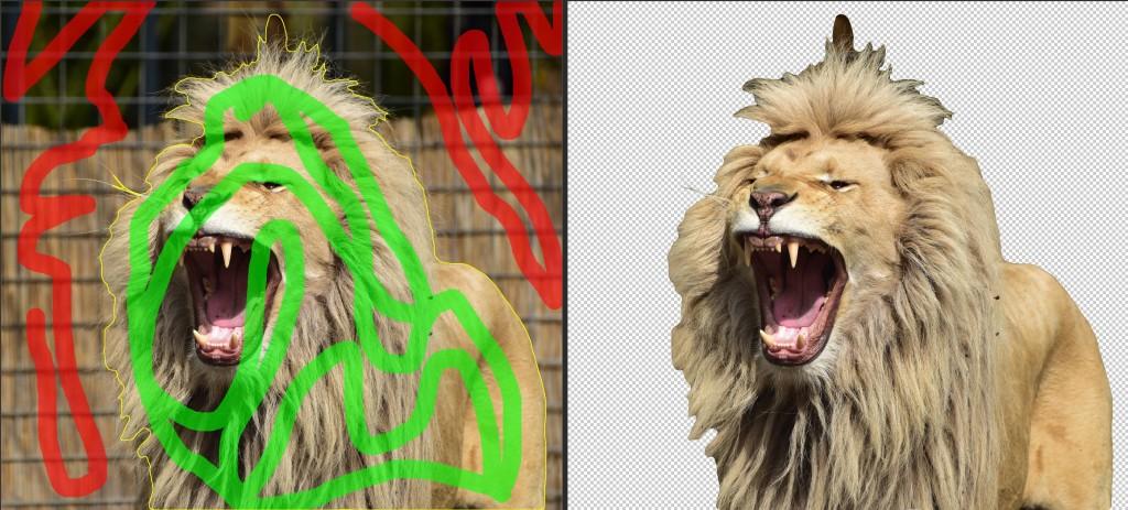 first-pass_lion